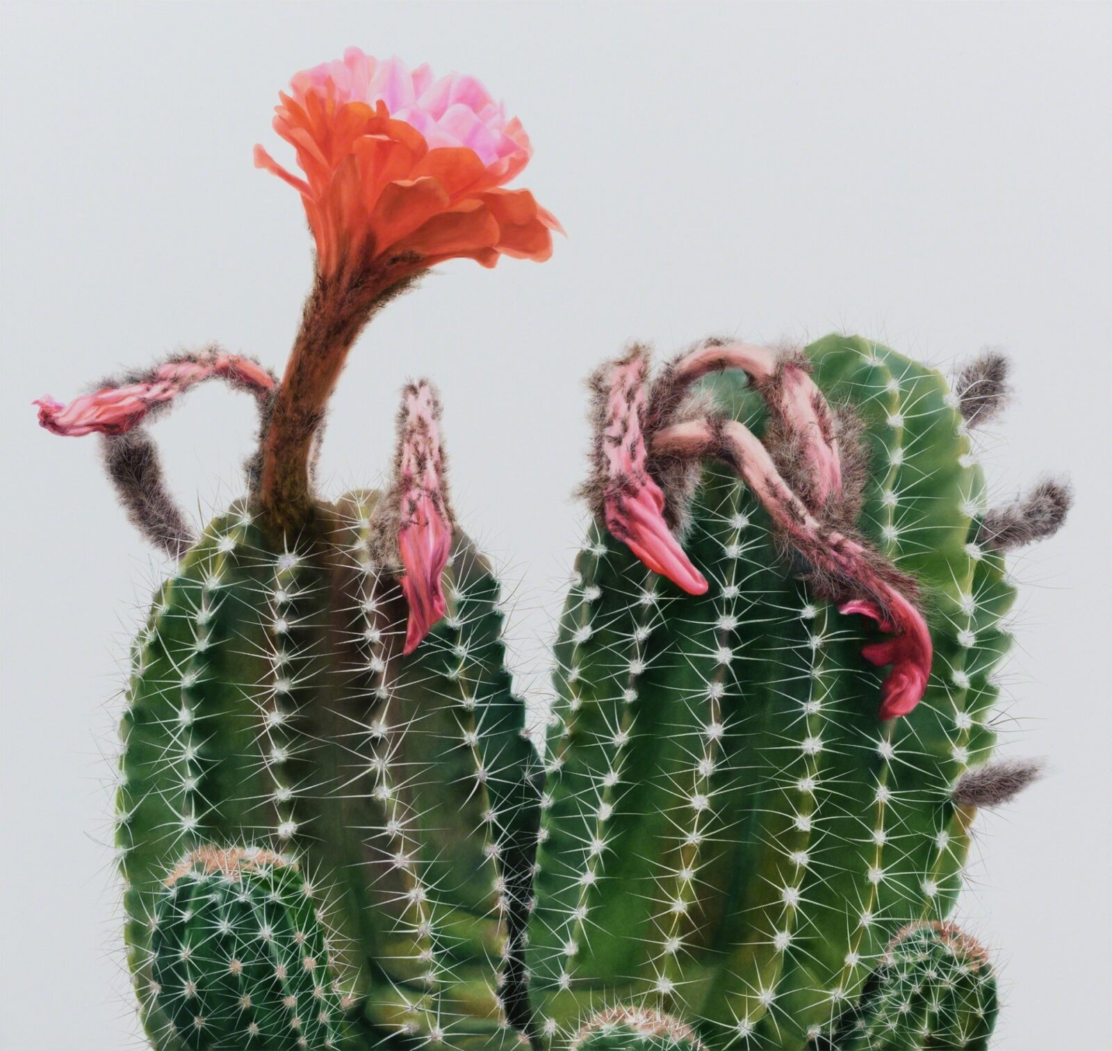 His Work Can Easily Be Taken For Photographs But Only On Closer Examination Do You Understand That Such Cacti Hardly Exist In Nature Forms