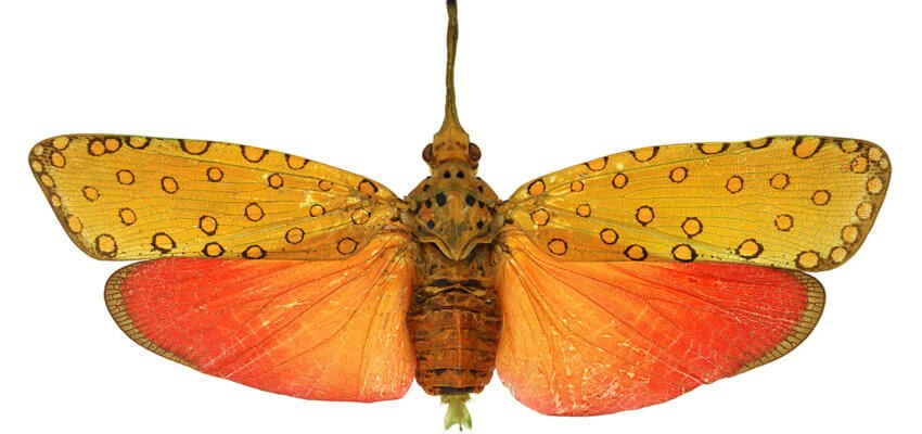 The Bishop Museum of Science and Nature - Insects in Focus