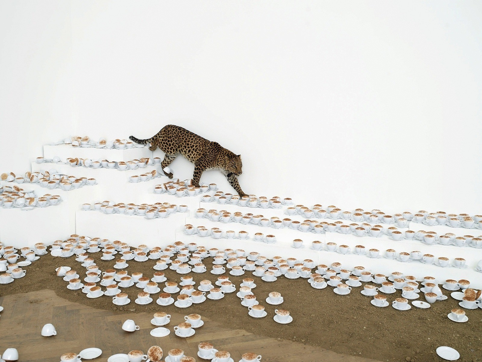 Paola Peewee. One cup of cappuccino, and I will go, 2007 Type of installation at the Art Museum Basel, Germany 3000 cups of coffee, live leopard. The image is provided by the author