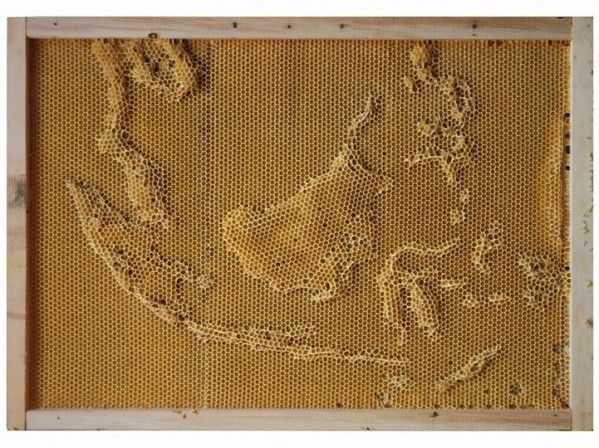 Works Of Art From Bees And Artist Ren Ri