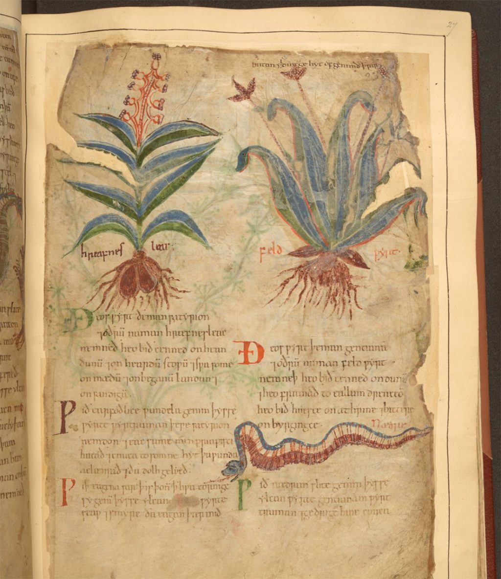 Digitally Explore a 1,000-Year-Old Illustrated Guide to Plants and Their Medical Uses