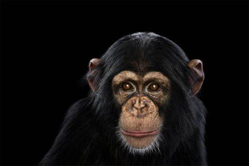Animal's Amotions On Stunning Photos By Brad Wilson