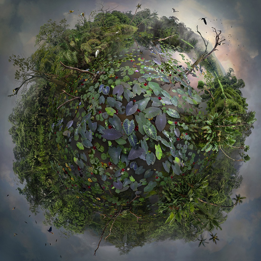 Natural Spheres by Catherine Nelson