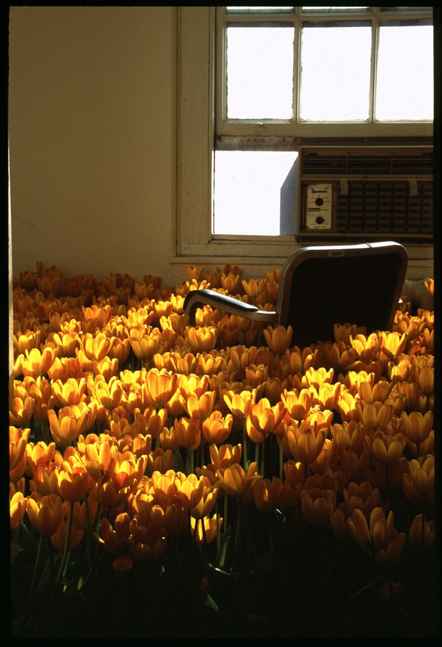 28,000 Fowers in an Abandoned Psychiatric Hospital