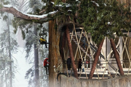 Giant Sequoia Skyscraper Lets You Live in the Trees