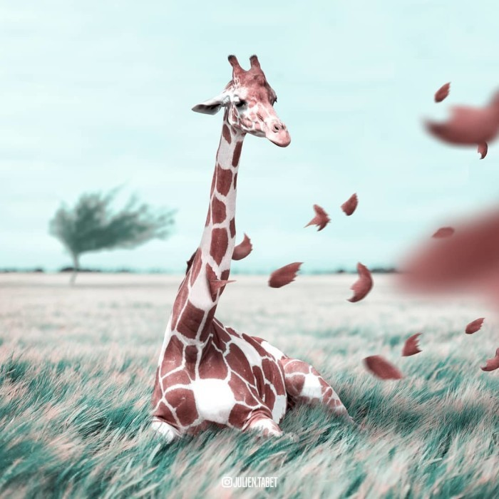Bright surrealistic art by digital artist Julien Tabet