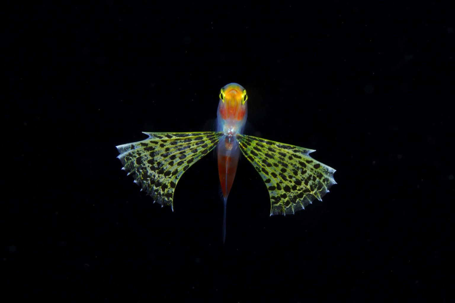 Jewels in the Night Sea: Luminous Plankton Captured in the Dark Waters of the Osezaki Sea