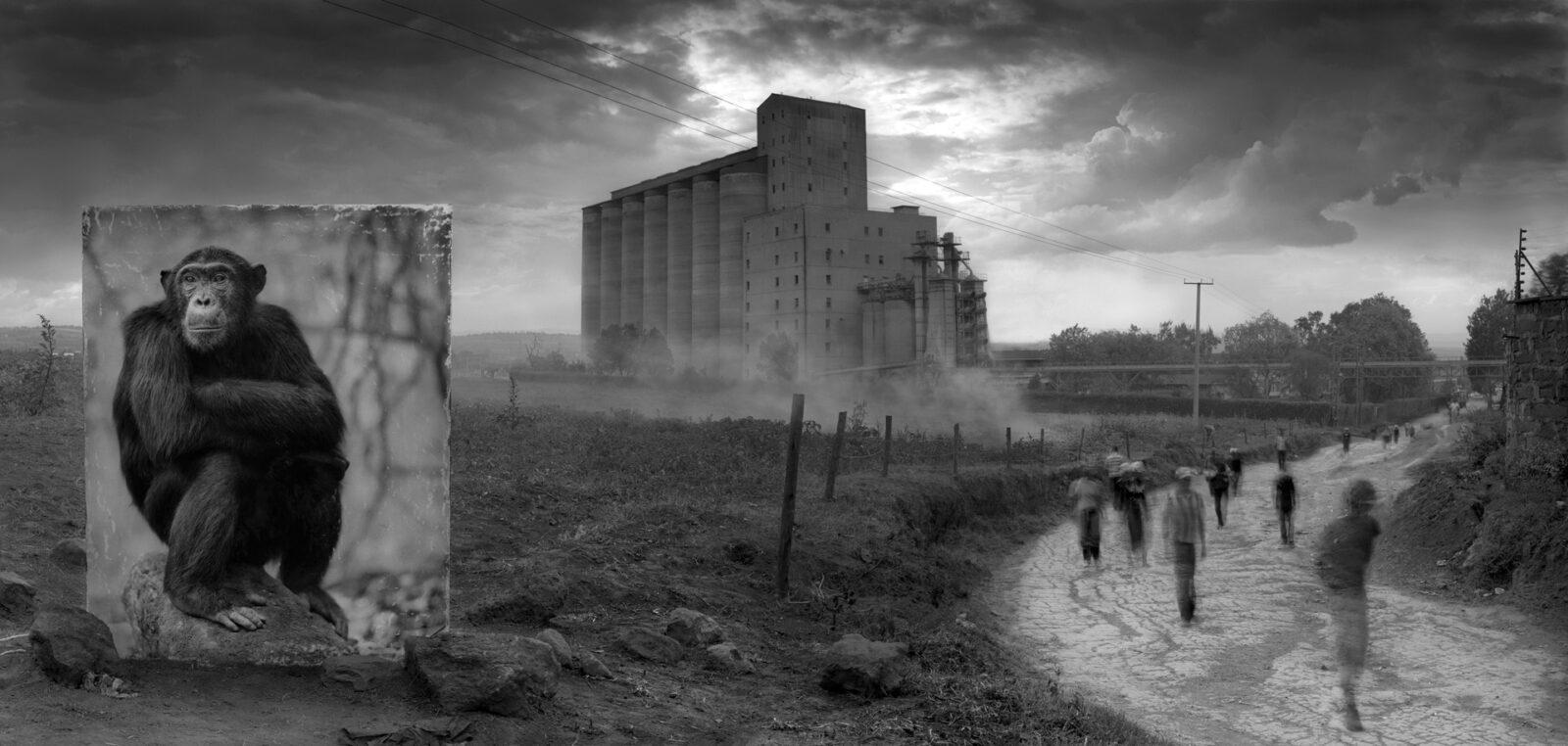 "Wildlife Photographer Nick Brandt: ""I shot Animals As People"""