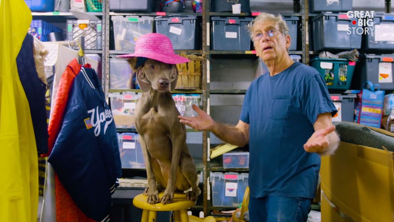 Go Behind the Scenes with Photographer William Wegman and his Famous Weimaraner Dog Portraits